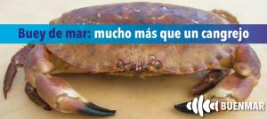 buey-de-mar-buenmar-mucho-mas-que-un-cangrejo