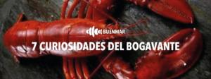 7-CURIOSIDADES-DEL-BOGAVANTE-BUENMAR