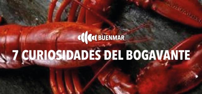 Bogavante: 7 curiosidades de este preciado marisco