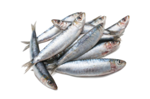 comprar sardinas BUENMAR